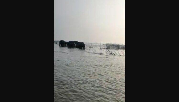 elephants in lake