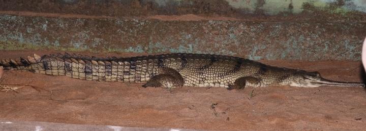 ghariar
