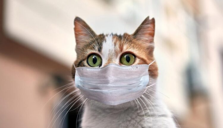 pet in mask
