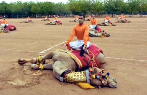 BSF' Yoga on camels' back draws public ire on social media.