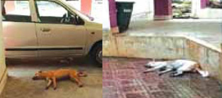 dog death