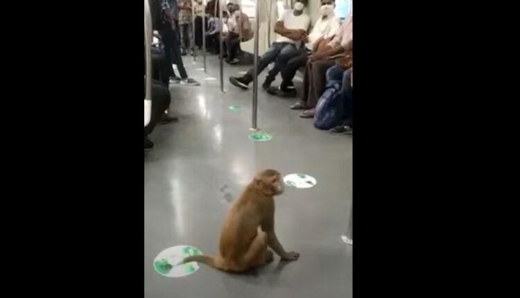 monkey delhi metro
