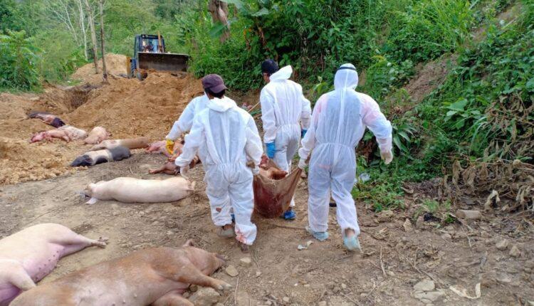 Amids Covid pandemic, over 10,600 pigs die of African Swine Fever in Mizoram.