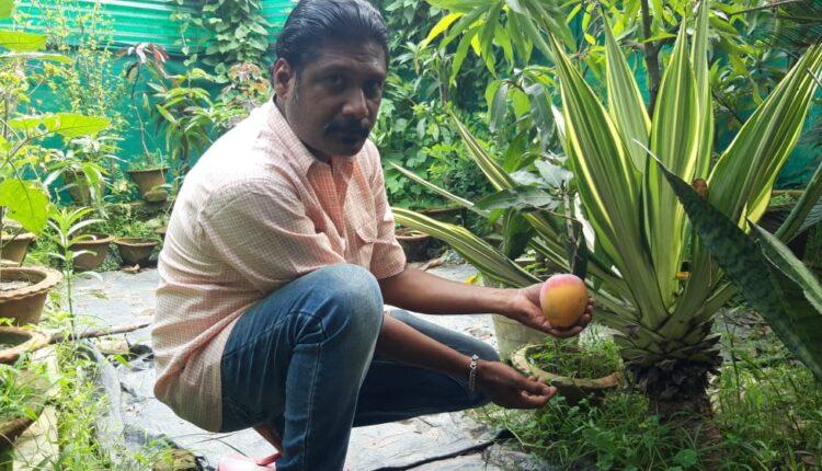 rourkela mango