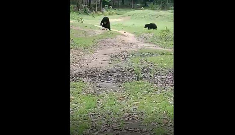 bears playing football