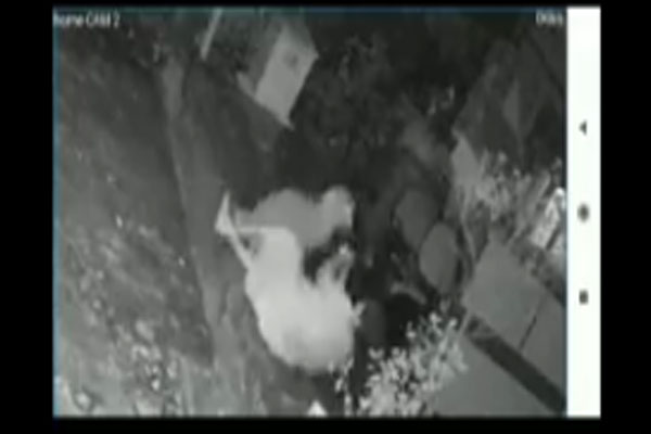 leopard-attacks-woman