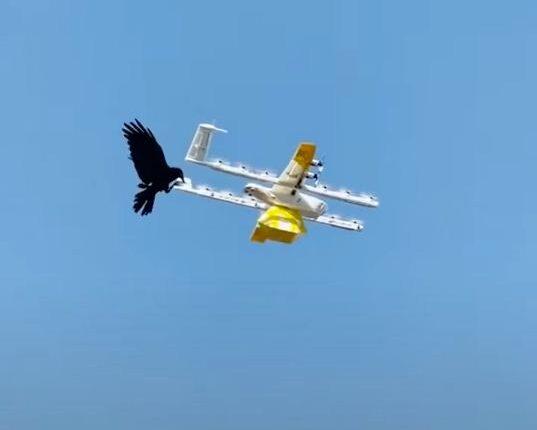 raven attacks drone