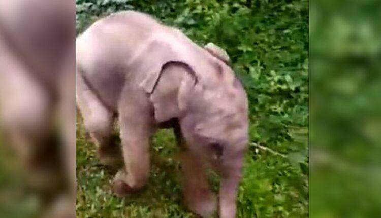 baby elephant_tamil Nadu